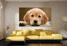 Appendere foto su plexiglass sopra divano_esempio labrador