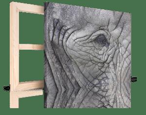 foto su tela per natale 4_esempio elefante